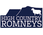 High Country Romneys for top quality New Zealand Romney breeding stock
